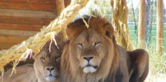 I migliori zoo safari in Italia