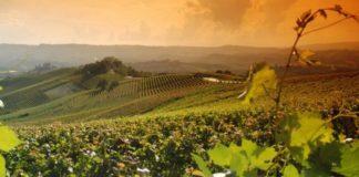 Paesaggio vitivinicolo del Piemonte - Patrimonio Unesco da gustare
