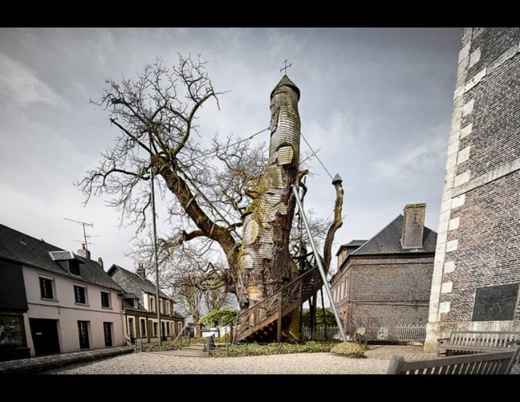 Gli alberi vuoti dalla Francia all'Inghilterra alla Georgia, all'Africa